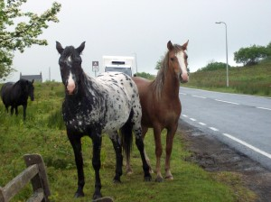 Nosy Horses