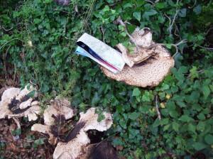 Fungi in Glen Audlyn